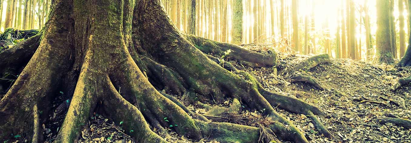 Photographie d'un arbre et ses racines, crédit : Freepik et mrsiraphol