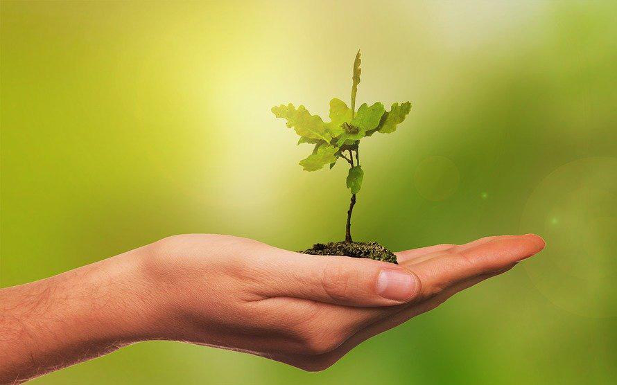 Photographie d'une jeune pousse chêne dans la paume d'une main. Crédit : Pixabay et Nico Wall